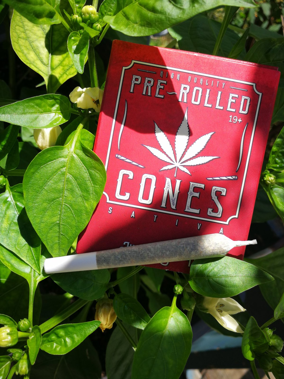 Product Review: Pre Rolled Cones8-Packs